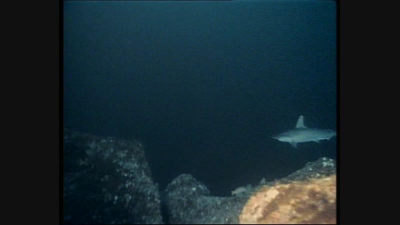 40-2 Кокосовый остров - Акулы острова сокровищ (Одиссея Жака Кусто HD 1991г)