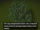 В обычном варианте, проще на могилке посадить дерево с тем же успехом.