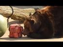 Медведица проснулась