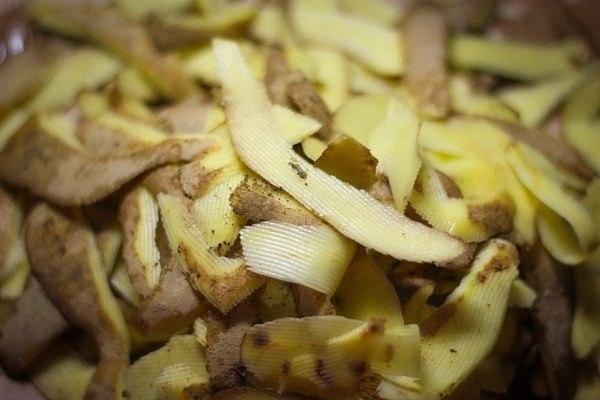 удобрение из картофельных очистков - бесплатно и безопасно в отличие от химикатов, органика гораздо быстрее разлагается, перерабатываясь содержащимися в почве бактериями. это значит, что нужные