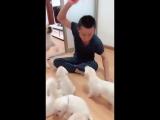 Что происходит, когда вы пытаетесь наказать щенков перед их мамой