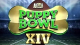 Harry Connick Jr on Instagram MONDAY 820 Cute #PuppyBowlPups &amp ref Dan Schachner are here! PLUS #BizarreFoods host Andrew Zimmern AND 10-year-...