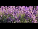 Лавандовые поля Франция ⁄ Lavender fields France 4K Ultra HD
