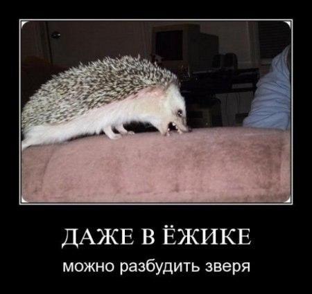 http://cs405519.userapi.com/v405519746/8376/KBNuG4NIpBk.jpg