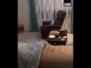 Сломали кота (VIDEO ВАРЕНЬЕ)