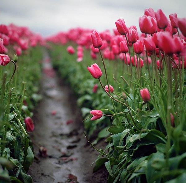 Весна в Вудбёрн, Орегон, США