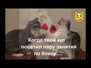 Как дерутся коты. Убойное видео прикол. /How cats fight