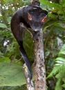 Хвостатый Копирайтер. Интересное о животных фото #14