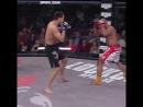 Андрей Корешков жестко нокаутировал соперника в своём дебюте в Bellator