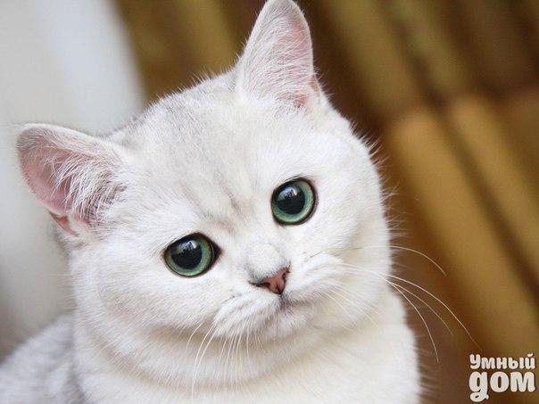 """Пушистый друг вместо таблетки. Новые исследования доказывают, что простое поглаживание домашнего любимца помогает не хуже, чем лекарство. Несколько лет назад в одной из английских больниц провели эксперимент, чтобы узнать, как кошка может стабилизировать пациенту давление. Больным вначале измерили этот показтель, а потом принесли животных. Через 20 минут врачи повторно проверили давление и выяснилось, что оно пришло в норму. Доктора связывают лечебную способность пушистых """"комочков"""" с…"""