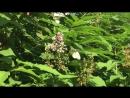 Кемеровские бабочки в июне