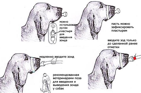 Заворот желудка. Mmzd-yOrb6A