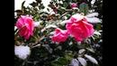 Не орхидеи: много снега, кота и фотографий южного Девона