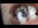 Девушка проглатывает мышь mp4