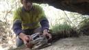 Северная сумчатая куница выпуск после реабилитации / 4 Elements Environmental Consulting Cairns - Northern Quoll Dasyurus hallucatus Release