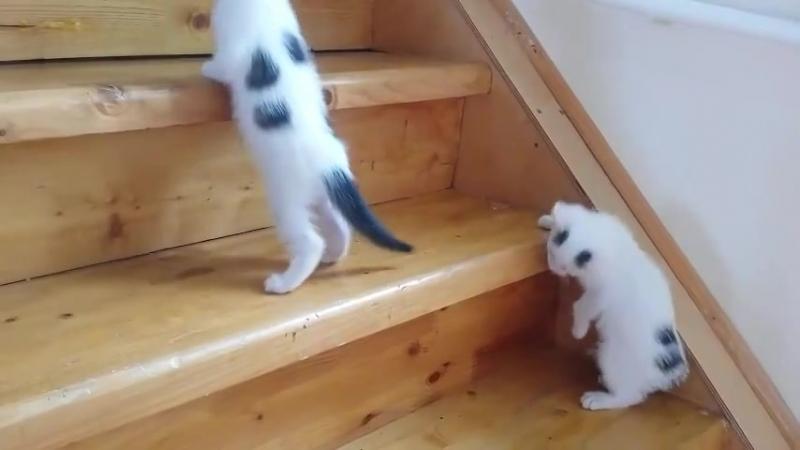 Балу и Барся учатся забираться по лестнице.