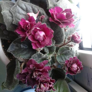 Цветы у Ликки TUfgDBE2urI