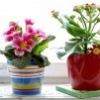 """Домашние растения """"цветы* (отдам-поменяю-продам)"""