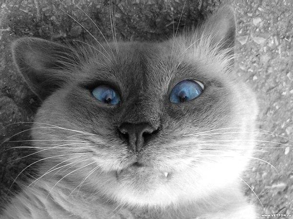 Советы неопытным котам