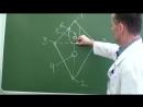 Схема топографии женской промежности