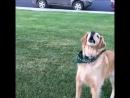 Жизнь кидает тебе ништяки, а ты - эта собака