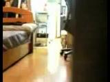 телепорт(кот)