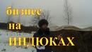 СКОЛЬКО Я ЗАРАБОТАЛ НА ИНДЮКАХ хутор Загайки
