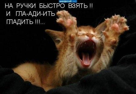 http://cs322316.vk.me/v322316104/476c/JuMNKQUkPgQ.jpg