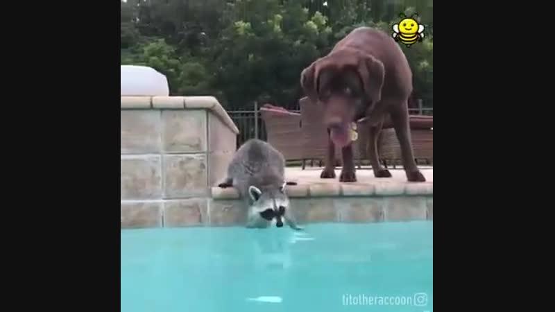 Енотик, собакен и бассейн!