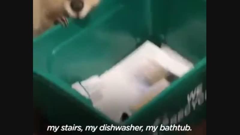 JB The Beaver Loves Making Household Dams