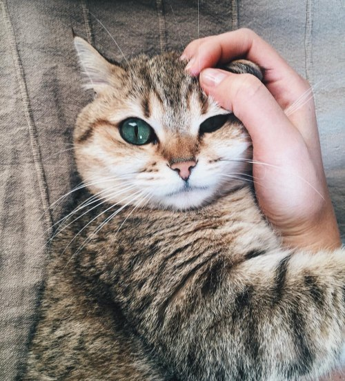 Котики на злобу дня!