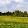 Участки в Ленинградской области недорого