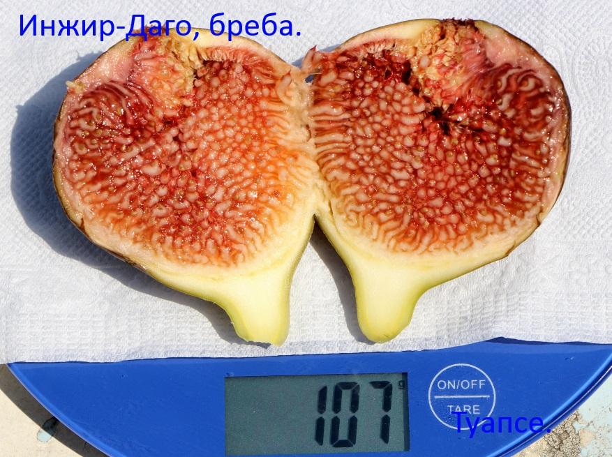 UmVa334L04M.jpg