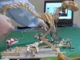 Врач-хирург ветеринарной медицины г.Херсон в школе UShPO (vet)