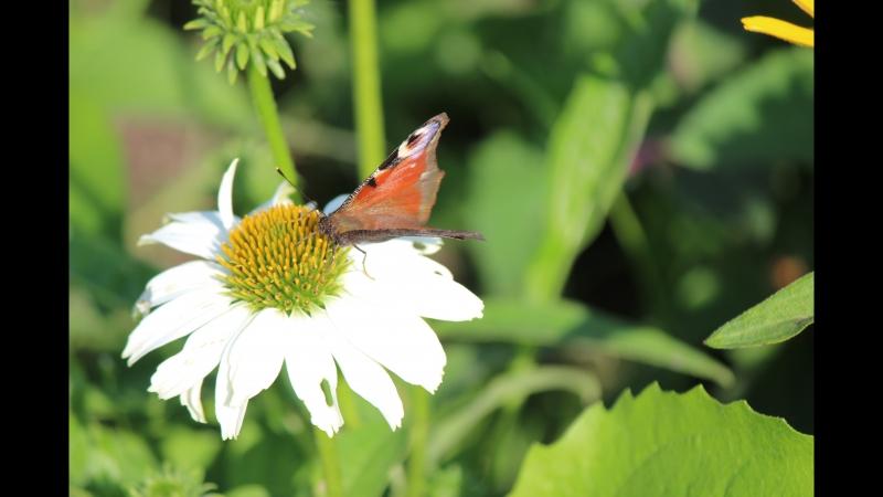 Будь ближе к природе и цветы к тебе потянутся