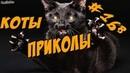 Смешные Коты 2018 ДО СЛЁЗ - Приколы с Котами и Кошками - Funny Cats
