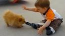 Funny Animals 🐶🦄🦋 Trolling Babies 👶 and Kids 👧👦面白い動物トローリング赤ちゃんのコンパイ