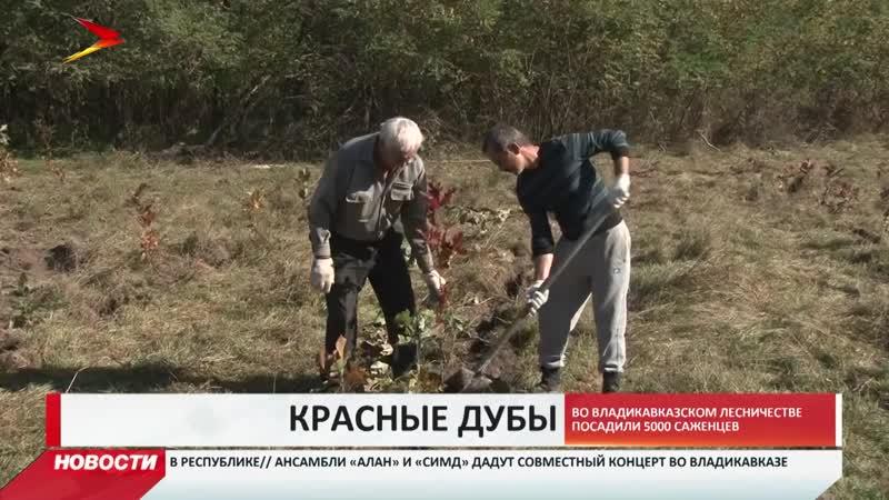 В Северной Осетии высадили 5 тысяч саженцев красного дуба