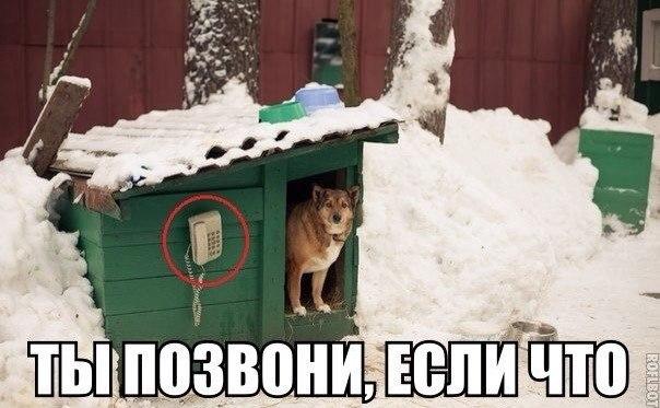 http://cs419030.vk.me/v419030303/8f11/Qm5cDLH2vvQ.jpg