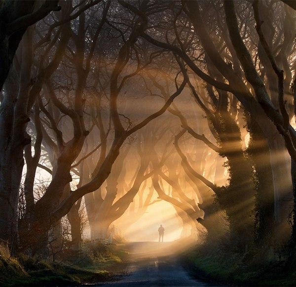 Буковая аллея, Хэджес, Ирландия