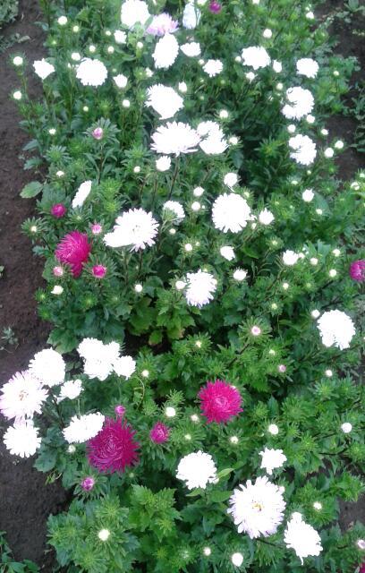 Цветы у Ликки D6io3pSu4m0