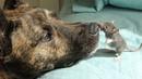 Эта собака спасатель страдала от депрессии пока не нашла необычного друга