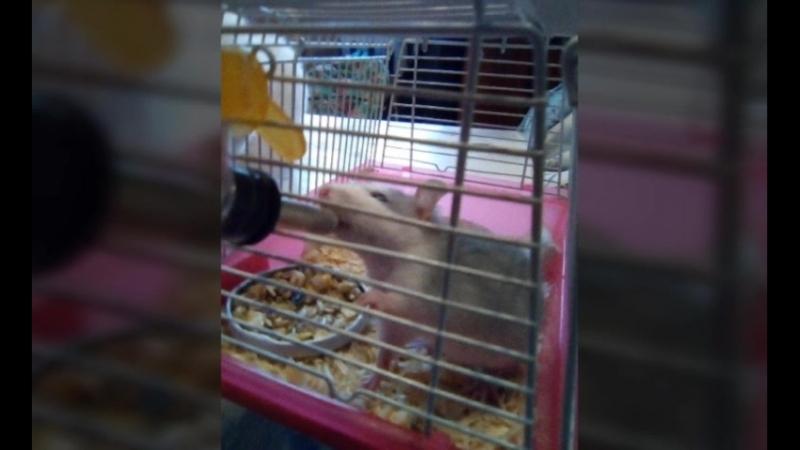 слайд шоу животных