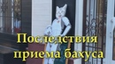 Lost Sector,Побочные эффекты от бахуса(fun video)