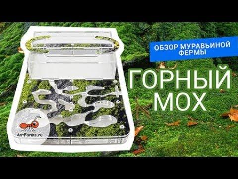 Видео обзор муравьиной фермы Горный Мох Мини