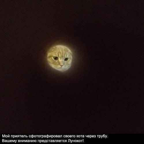 Как оригинально сфотографировать кота… (1 фото) - картинка