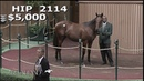 Roy H as a Keeneland September Yearling