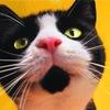 Кошачьи заморочки. котята и кошки