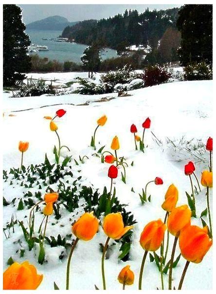 Весной оживают прикосновения, чувства, поцелуи. И мы тоже оживем. Ждать недолго.