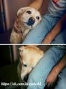 Только собака впитает всю вашу боль, когда это так необходимо…(с) F.s.